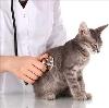 Ветеринарные клиники в Ачите